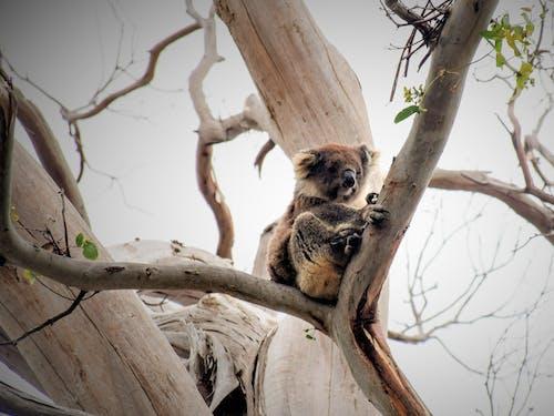 Immagine gratuita di albero, all'aperto, animale, animali