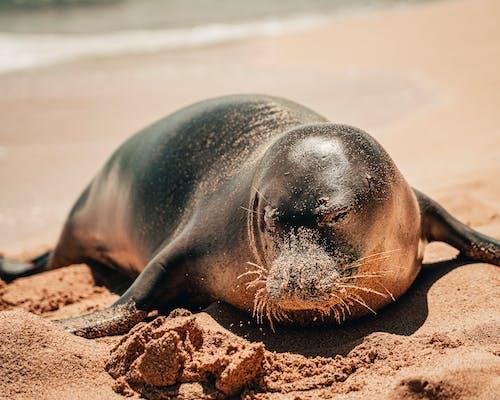 Photo of Sea Lion on Sand
