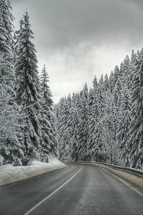 Fotos de stock gratuitas de bosque, carretera, Eslovaquia