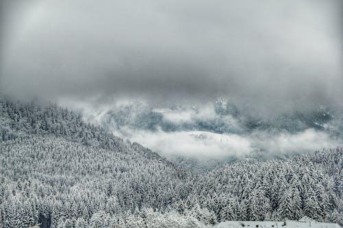Fotos de stock gratuitas de blanco, bosque, cielo nublado