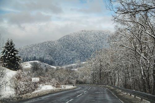 Fotos de stock gratuitas de arboles, bosque, carretera