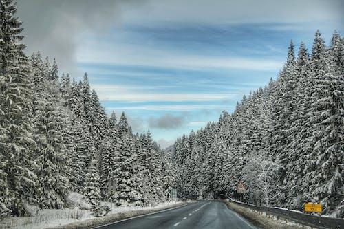 Fotos de stock gratuitas de bosque, carretera, cielo azul