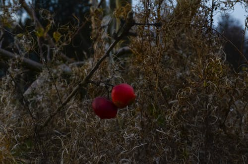 Ingyenes stockfotó lanndscape, naturecal, natureworld témában