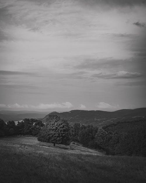 Immagine gratuita di albero, amante della natura, autunno, bianco e nero