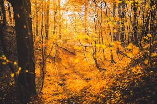 Kostnadsfri bild av bro, skog, träd
