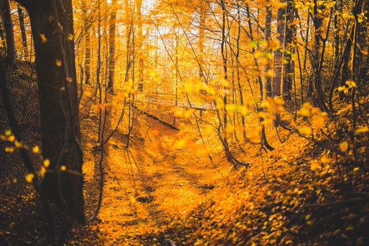 Orange Leaved Trees in Forest during Daytime