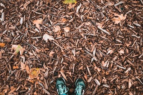 Free stock photo of autumn, autumn color, autumn leaves, countryside