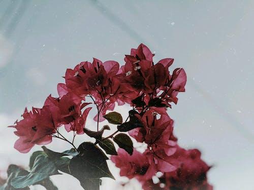 Foto stok gratis alam, bagus, berbunga, berfokus