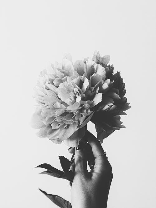 Grayscale Photography of Flowers