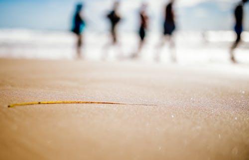 剪影, 夏天, 宏觀, 步行 的 免費圖庫相片
