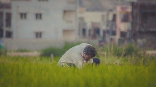 Foto d'estoc gratuïta de agricultor, granger, treballant