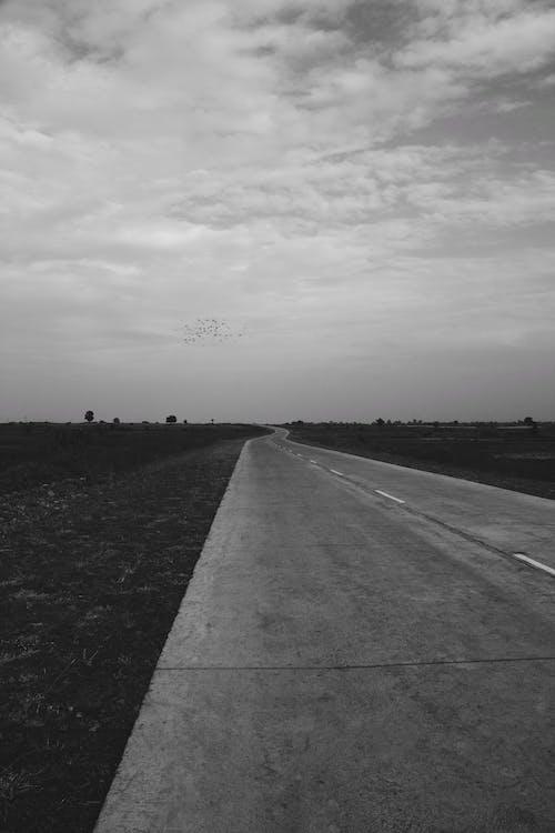 Imagine de stoc gratuită din alb-negru, drum