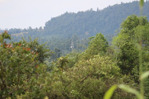 Free stock photo of cell tower, cell tower forest, cell tower in jungle