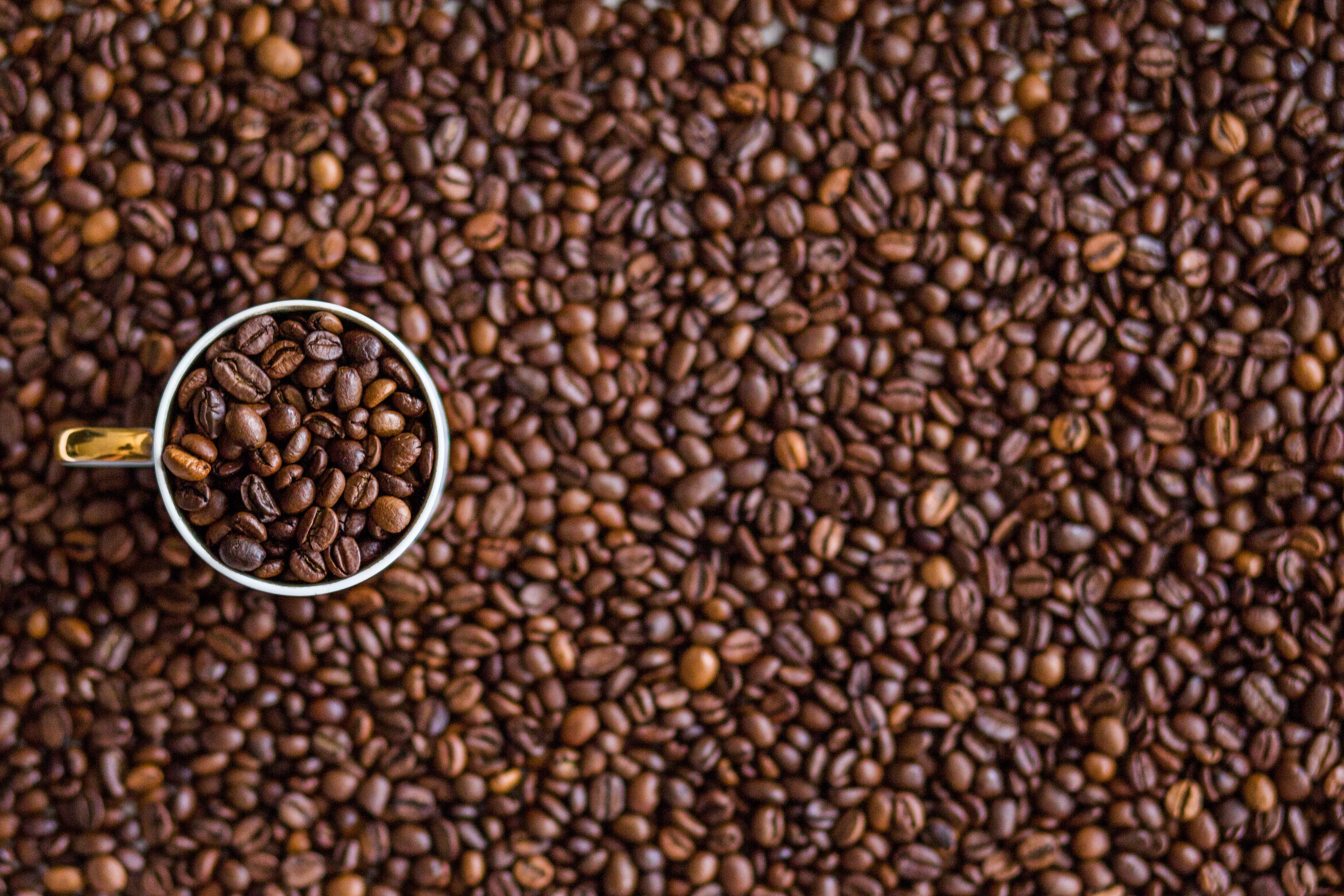 Gratis lagerfoto af bønner, Drik, kaffe, kaffebønner