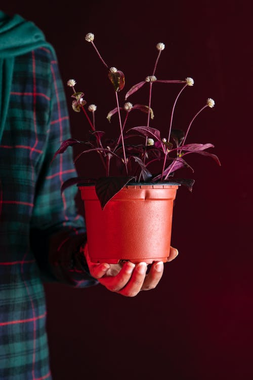 Personne Tenant Une Plante à Feuilles Brunes