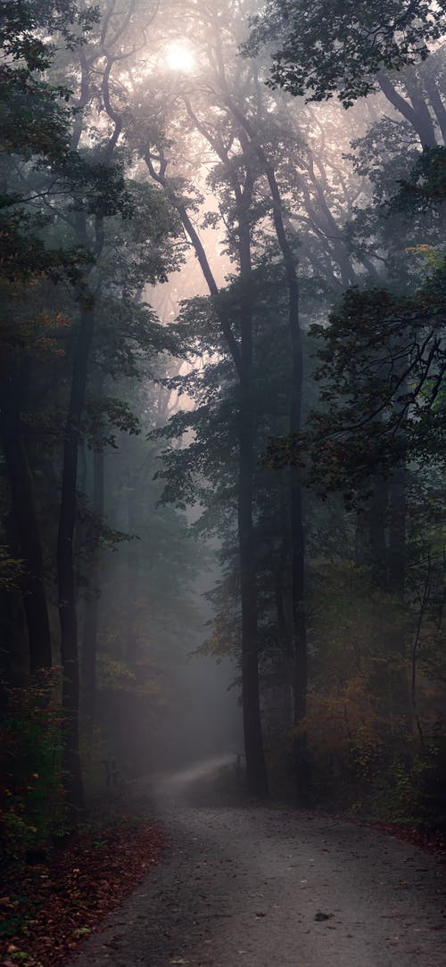 Gratis lagerfoto af bagbelyst, dagslys, dis, efterår