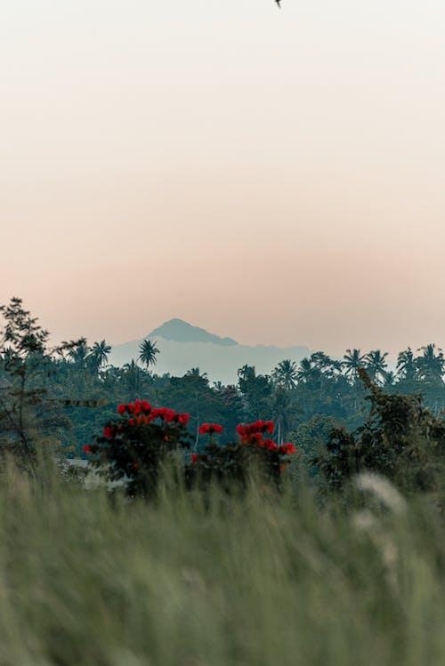 Fotos de stock gratuitas de afuera, aire libre, al aire libre, amanecer