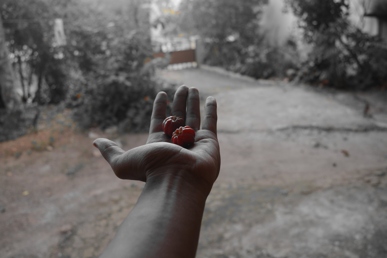 Free stock photo of fruits, mothernature, nature, nikon