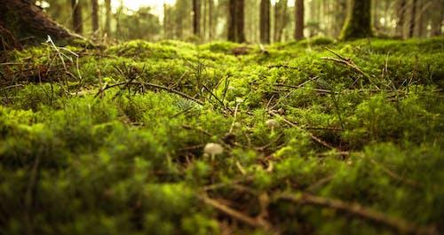 Gratis stockfoto met bomen, Bos, champignons, dageraad