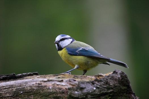 Free stock photo of nature, bird, cute, wildlife