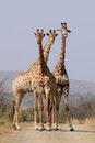 pattern, africa, animals