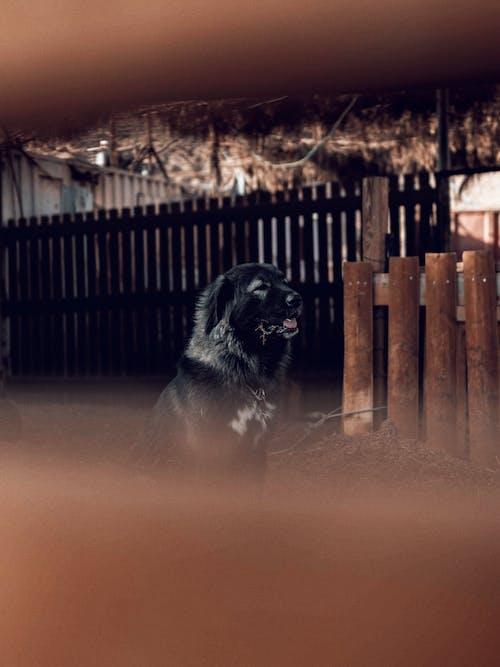 Photographie De Mise Au Point Sélective De Chien Noir Assis à Côté D'une Clôture Marron