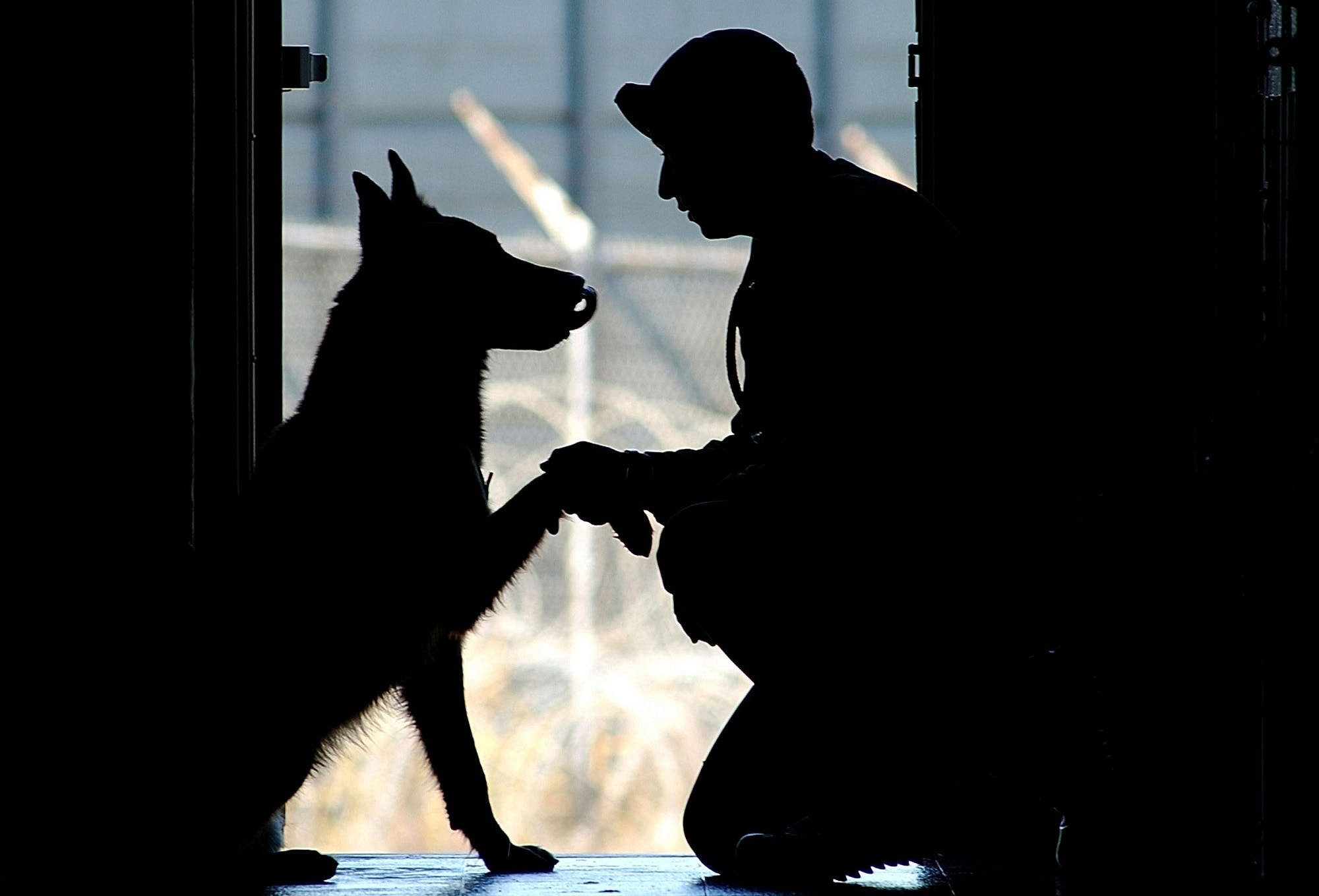 Free stock photo of affection, american, bond, canine