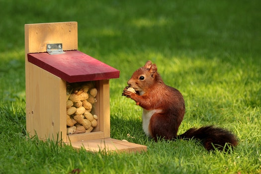 Free stock photo of animal, pet, rodent, squirrel