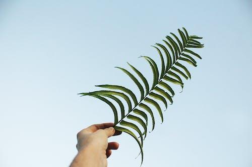 Kostenloses Stock Foto zu blauer himmel, dunkelgrün, dunkelgrüne pflanzen, farne