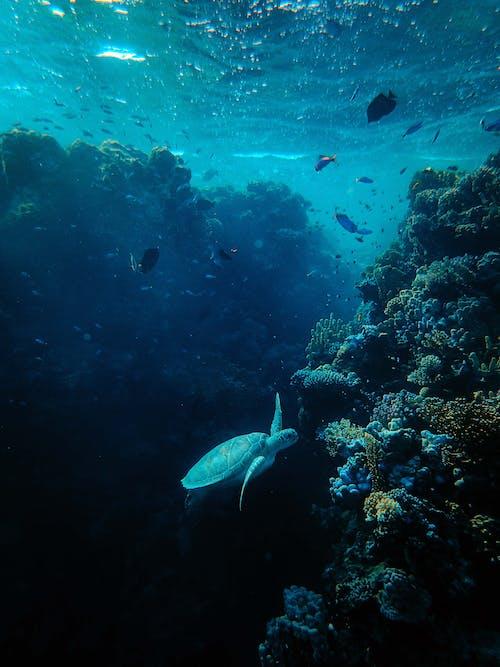 거북이, 깊은, 동물 사진, 바다의 무료 스톡 사진