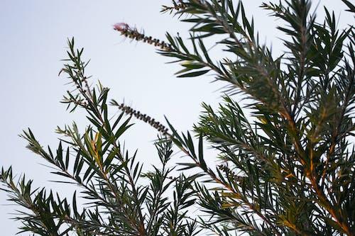 Kostenloses Stock Foto zu amazing nature, baum, bäume, blick in die natur