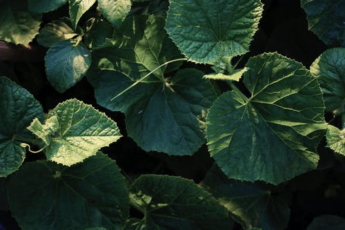 Kostenloses Stock Foto zu bergleben, botanischer garten, dunkelgrün, dunkelgrüne pflanzen
