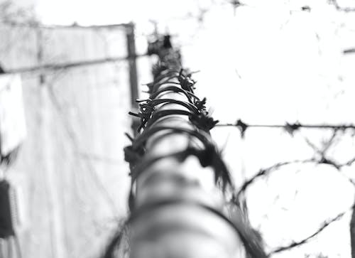 Ảnh lưu trữ miễn phí về bị mắc kẹt, bỏ trốn, dây thép gai, đen và trắng