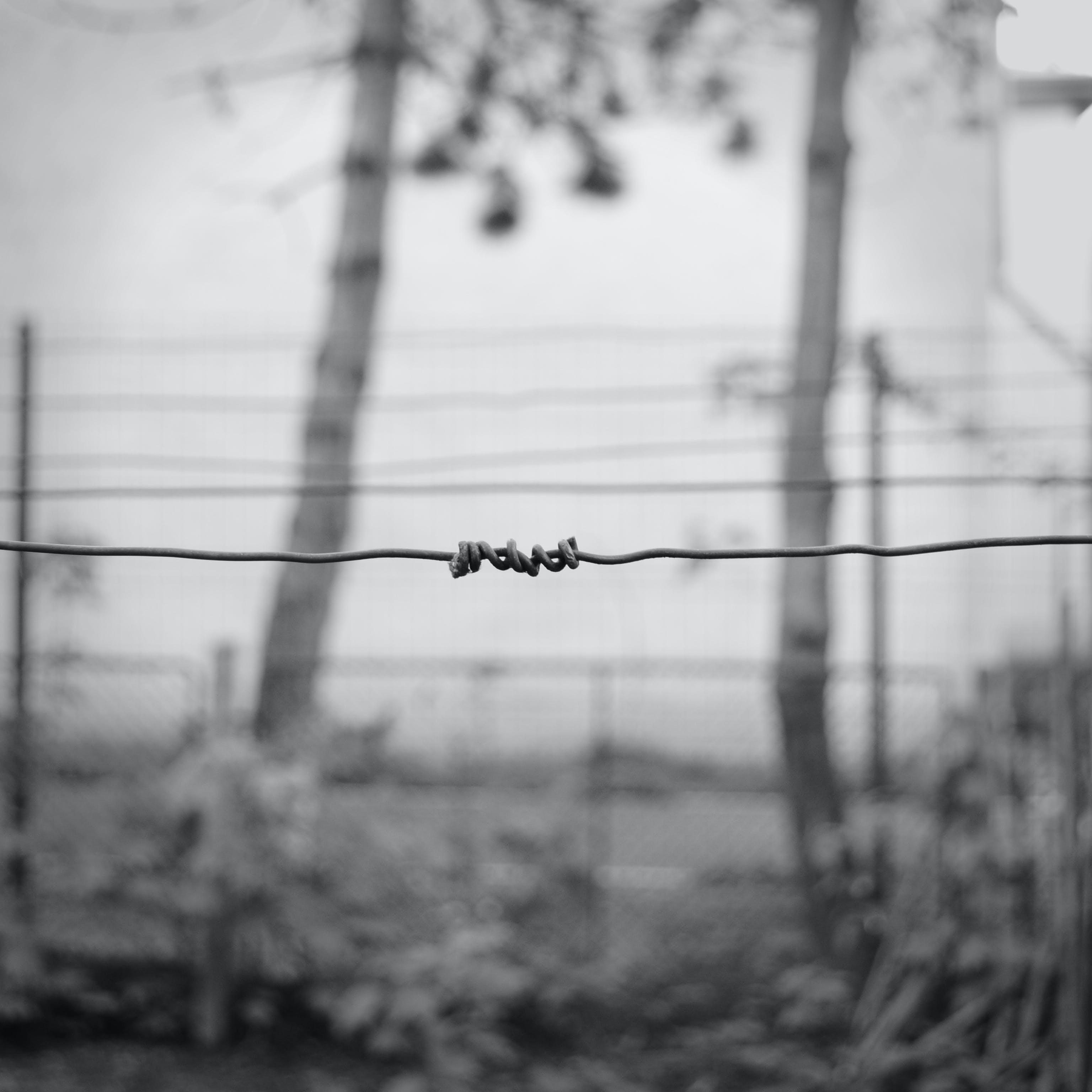 Free stock photo of barbed wire, black and white, depression, escape
