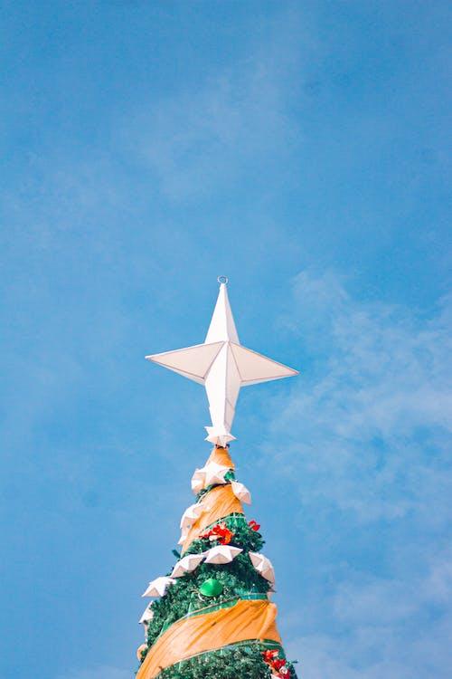 Foto d'estoc gratuïta de a l'aire lliure, adorn nadalenc, arbre de Nadal, cel