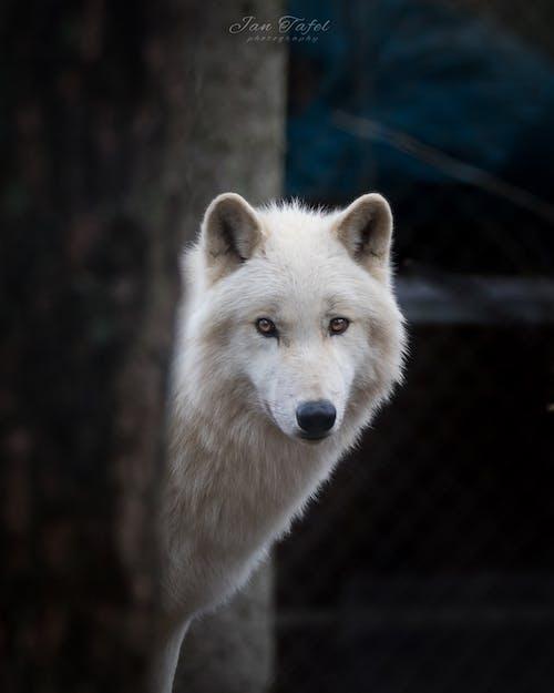 Free stock photo of animal photography, nature, wildlife