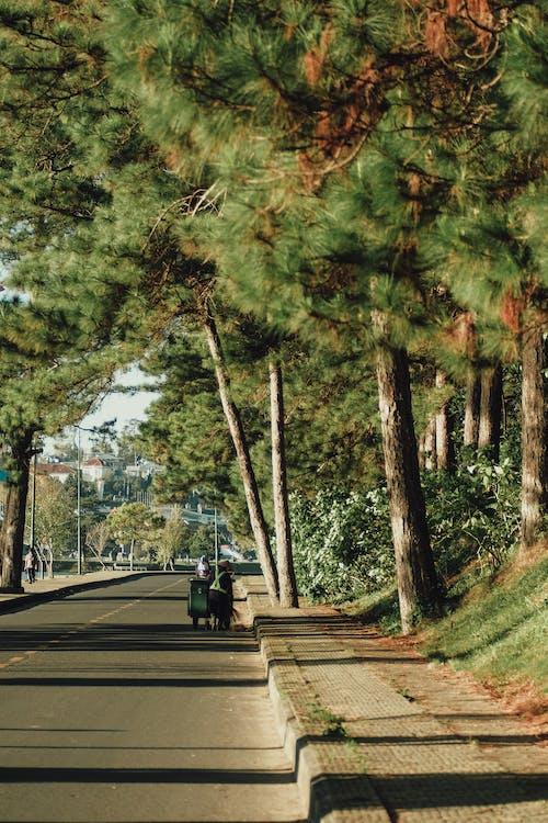 Kostenloses Stock Foto zu außerorts, bäume, blätter, fahrbahn