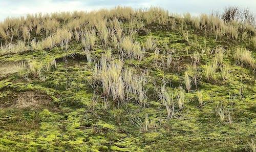Základová fotografie zdarma na téma duna, duny, tráva
