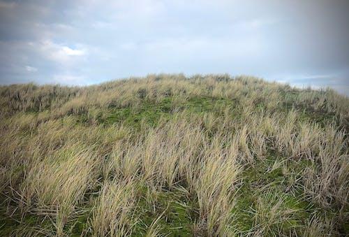 Základová fotografie zdarma na téma duna, duny, obloha, tráva