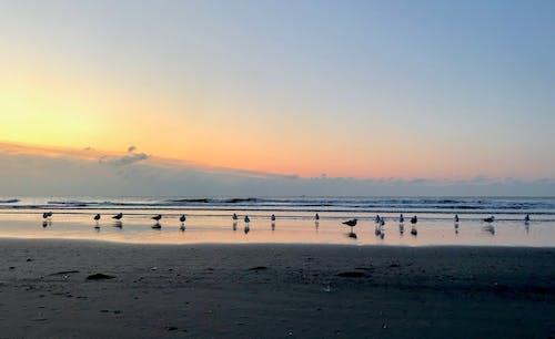 Základová fotografie zdarma na téma modrá, moře, oranžová, pláž