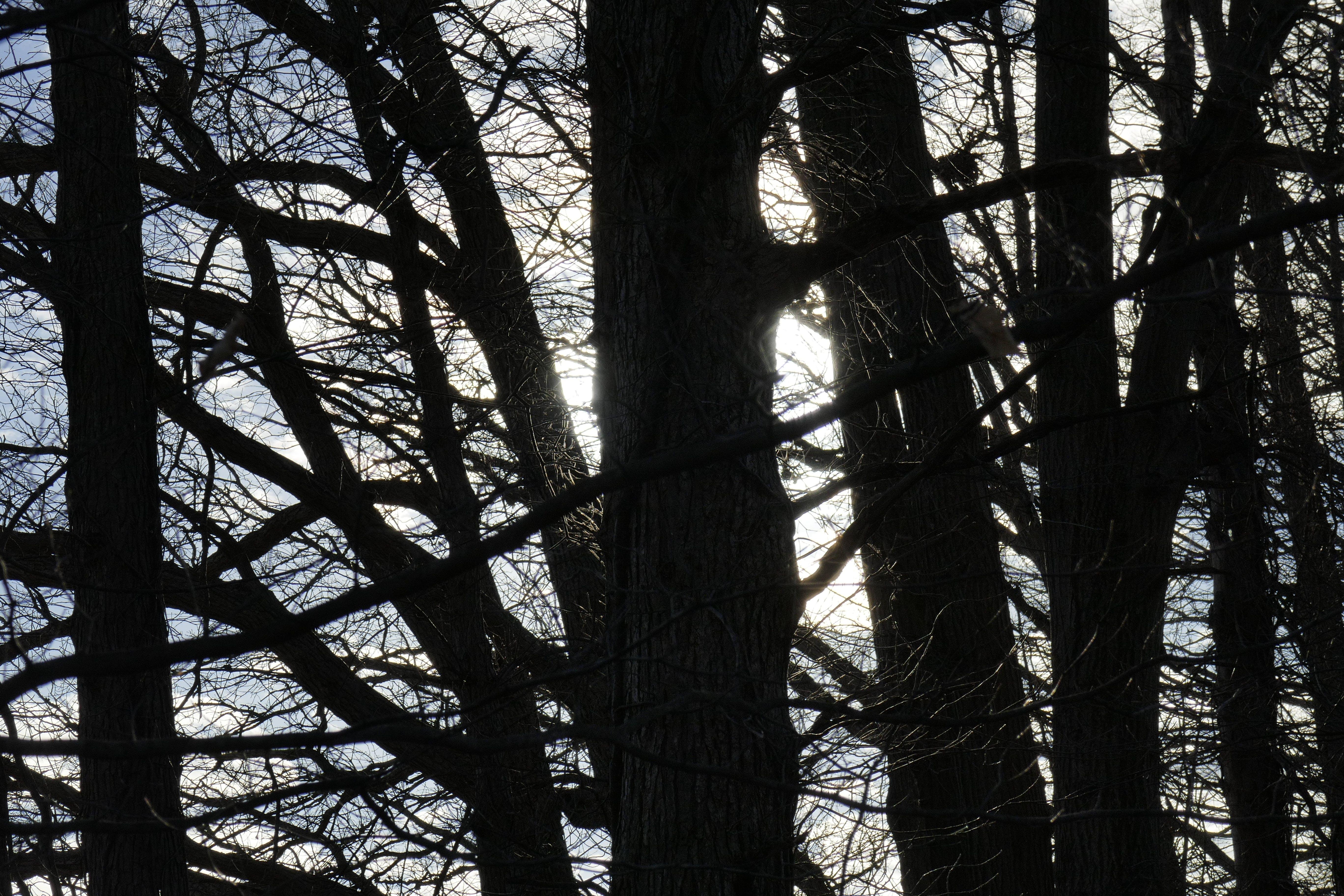 Kostenloses Stock Foto zu bäume, holz, witchy wald