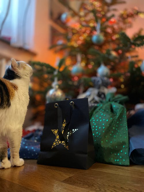 Free stock photo of cat, christmas