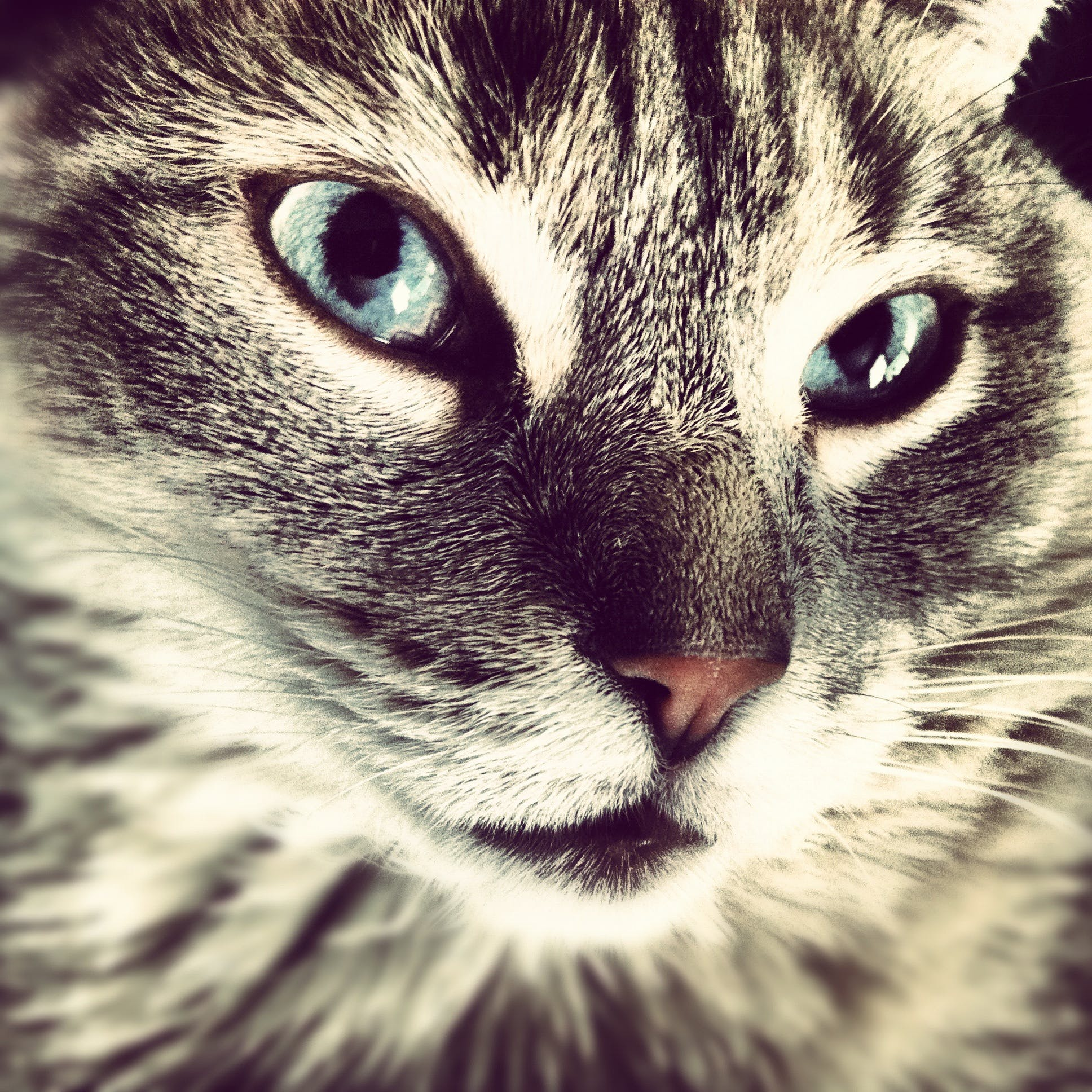 Free stock photo of pet, kitten, cat