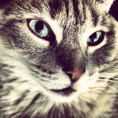 Gratis stockfoto met huisdier, kat, katje