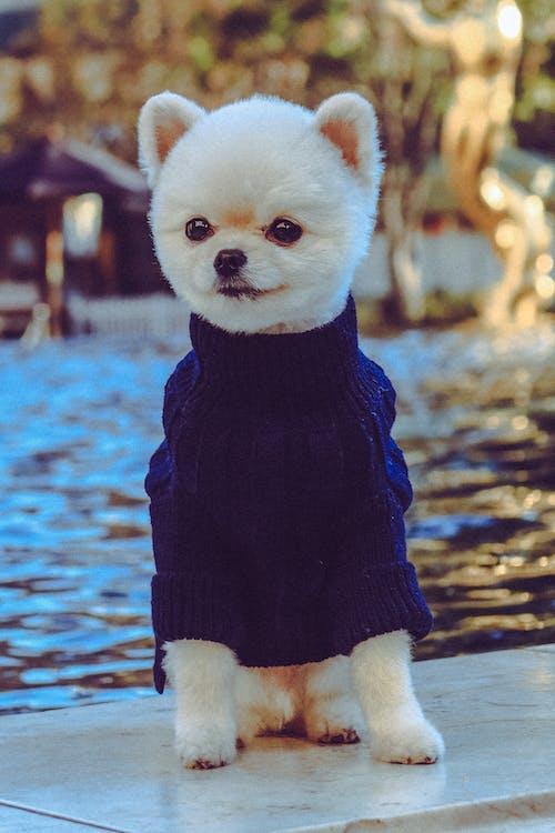 Free stock photo of cute, dog, pet