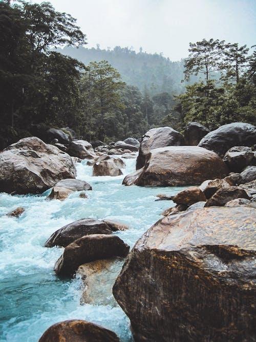 Foto profissional grátis de água, ao ar livre, árvores, calmo