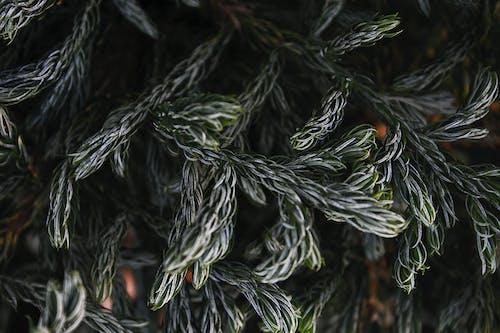 Kostenloses Stock Foto zu ausleuchtung, beleuchtung, dunkelgrün, dunkelgrüne pflanzen
