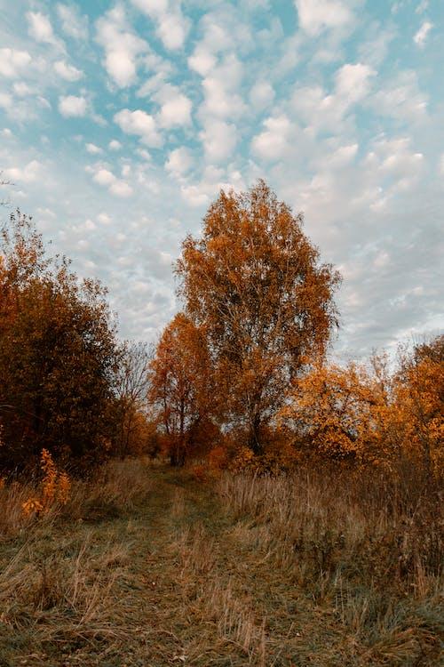天性, 天空, 森林, 秋天 的 免费素材照片