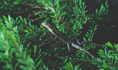 Green Reptile on Branch