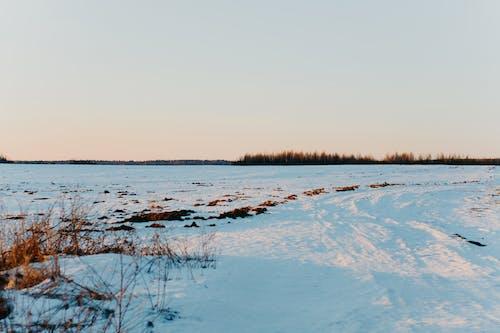 冬季, 天性, 寒冷的天气, 日落 的 免费素材照片